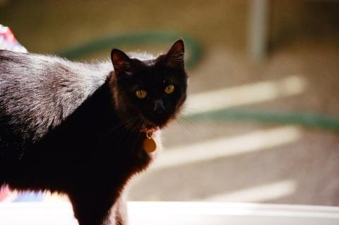 chole cat